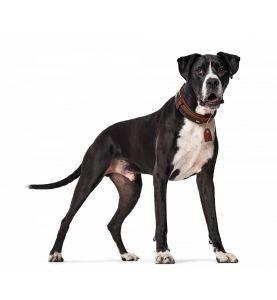 Hunter Halsbånd Cody Special Cognac/Mørkebrun